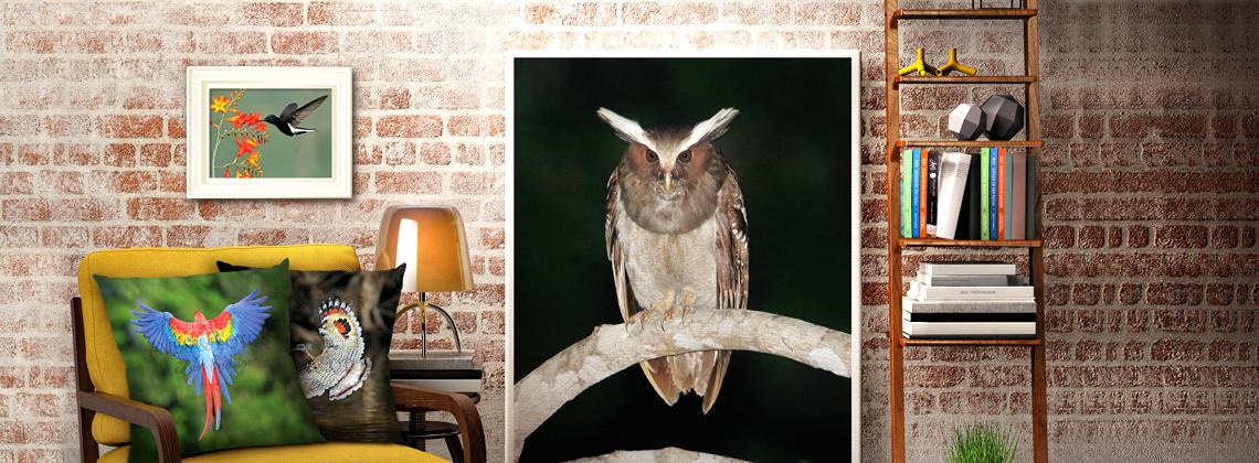 Compre já a impressão em alta qualidade da sua ave preferida.
