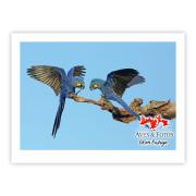 Arara-azul-grande - Copyright © AVES & FOTOS Editora / Edson Endrigo