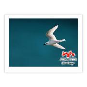Grazina Impressão Fotográfica 40x30cm Aves e Fotos Editora por Edson Endrigo