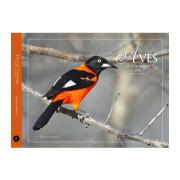 Livro Aves-da-Caatinga Volume Coleção 6 Aves do Bioma Brasileiro Aves e Fotos Editora por Edson Endrigo