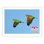 Papagaio-charão (casal) - Copyright © AVES & FOTOS Editora / Edson Endrigo