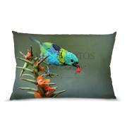 Saíra-sete-cores almofada 45x30cm Aves e Fotos Editora por Edson Endrigo