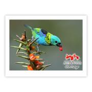 Saíra-sete-cores - Copyright © AVES & FOTOS Editora / Edson Endrigo