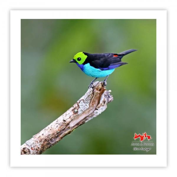 Sete-cores-da-amazônia