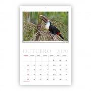 calendario-2020-aves-e-fotos-editora-2