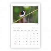 calendario-2020-aves-e-fotos-editora-3